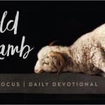 Day 40: The Worship of the Lamb